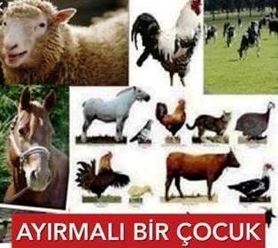 AYIRMALI-Bir-cocuk